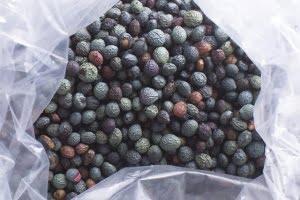 menengic-dried